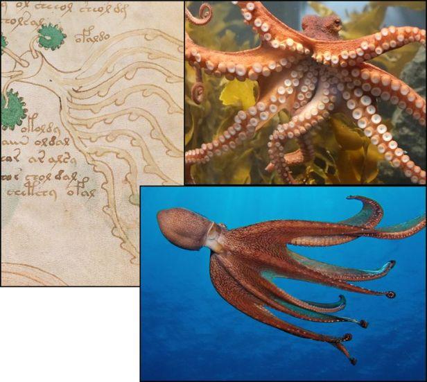 [Image: octopus.jpg?w=616]