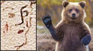 bearwatcher