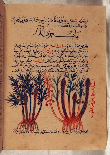 ghafiqi1