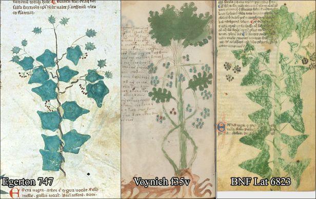 oak-ivy